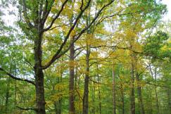 Forests of large hardwood trees decorate Glendon.
