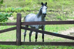 Many families in Left Hand keep livestock like geese, chickens, rabbits, and this horse.