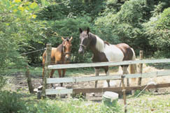 Many Widen residents keep livestock such as these horses